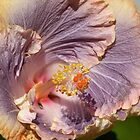 Hibiscus by PhotosByG