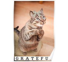 Cute cat with bow,grateful,typography,funny,happy, Poster