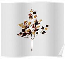 Leaf on White 1 Poster