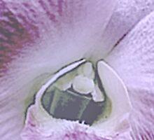 pinkpetals Sticker