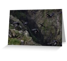 Flying choughs Greeting Card