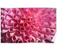 Pink Circle Petals Poster