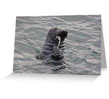 Seal feeding Greeting Card