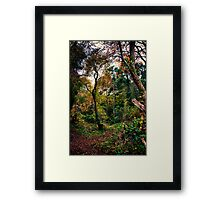 Forest Trees HDR Framed Print