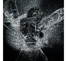Morpheus Photographic Print