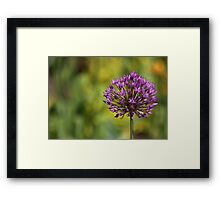 Purple Ball Framed Print