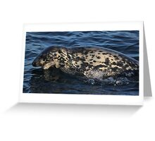 Leaping seal Greeting Card