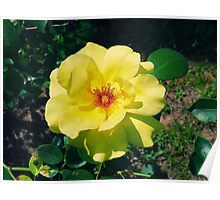 The Yellow Rose Poster