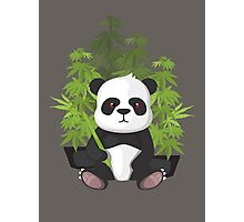 High panda Photographic Print