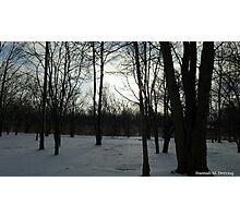 Bare Trees, Bright Sky Photographic Print