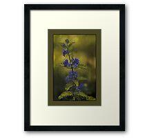 Sunshine Blue Framed Print