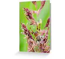 cross spider Greeting Card