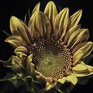 Sunflower III:  Upsy Daisy by Victoria Jostes