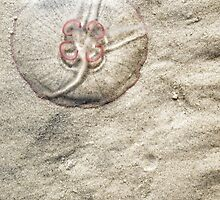 moon jelly on beach by novopics