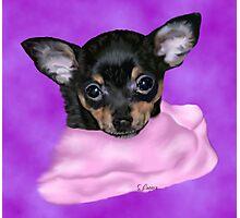 Cute Chihuahua Puppy Portrait Photographic Print
