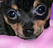 Cute Chihuahua Puppy Portrait Sticker