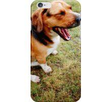 Beagle - Basset Hound Mix iPhone Case/Skin