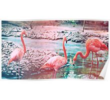 Exotic flamingos Poster