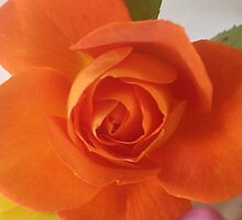 Orange Rose by Lucy Wright