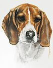 Beagle by BarbBarcikKeith