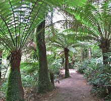 Australian Otways Rainforest by Fungiphile