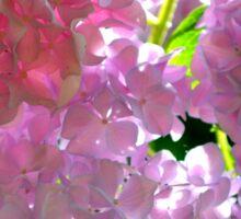 Radiant Pink Hydrangea Sticker