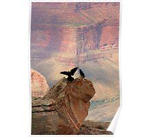 Grand Canyon Ravens Poster