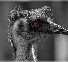 Mr Emu by Ladymoose