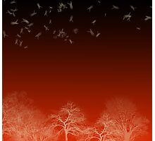 Mystic landscape in red and black Photographic Print