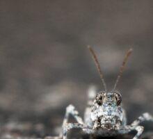 Grasshopper Closeup Sticker