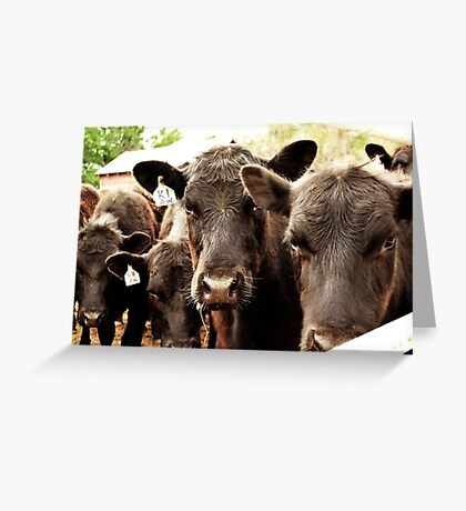 Legendary Cattle Greeting Card