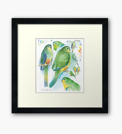 Orange-bellied Parrot Framed Print