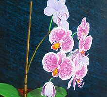 Orchid at the Studio by Cary McAulay
