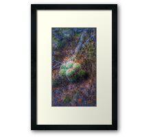 Sandia Mountain cactus hdr Framed Print