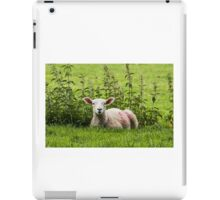 Lamb resting with the nettles iPad Case/Skin