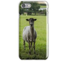 Ewe`s looking iPhone Case/Skin