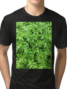 Leaves and dew  Tri-blend T-Shirt