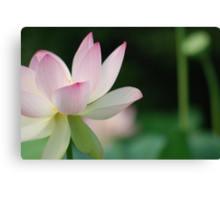 lotus position Canvas Print