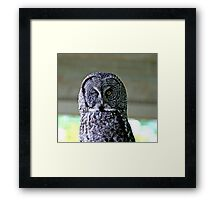 Here's Looking at You...........Kiddo Framed Print