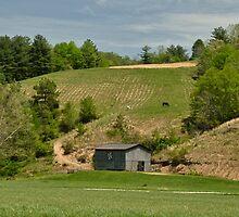 Kentucky Barn Quilt - Americana Star 2 by mcstory
