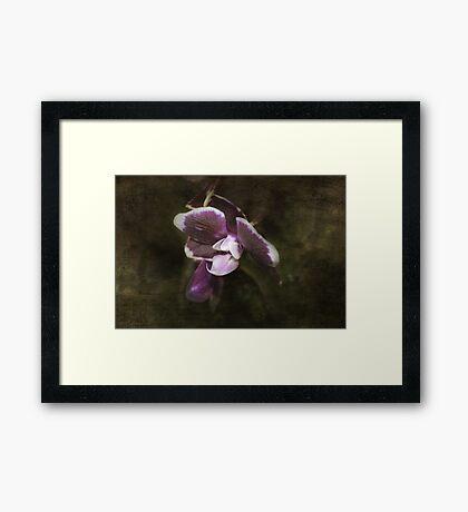 Exotic Framed Print