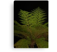 Fern in the Night Canvas Print