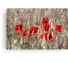 Poppies - JUSTART ©  Canvas Print