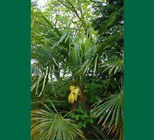Chusan Palm (Trachycarpus fortunei) Unisex T-Shirt