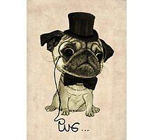 Pug; gentle pug. Photographic Print
