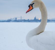 Industrial Swan by ZNature