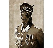 Second War Doberman. Photographic Print