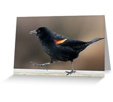 Blackbird Bootcamp Greeting Card