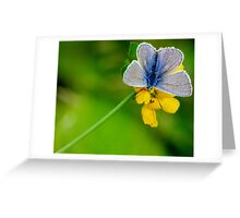 Butterfly - Blue Beauty Greeting Card