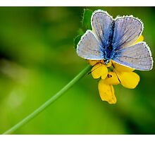 Butterfly - Blue Beauty Photographic Print